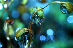 Dew Drop Macro Photographs by Sharon Johnstone