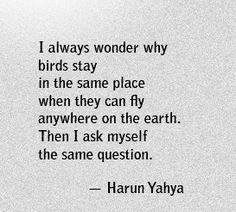 #Fuelisms : I always wonder why birds stay in the same place when they can fly anywhere on earth. Then I ask myself the same question.