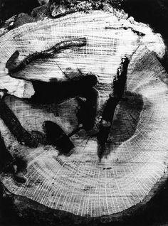 Mario Giacomelli, Motivo Suggerito dal Taglio dell'Albero (1964/74)