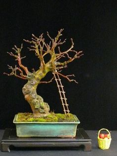 bonsai tree landscape