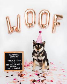 Dog Collar Choker Dog Letter Board Quotes Shiba Inu Puppy Dog First Birthday Dog Birthday Letter Board Dog Birthday Photo Shoot.Dog Collar Choker Dog Letter Board Quotes Shiba Inu Puppy Dog First Birthday Dog Birthday Letter Board Dog Birthday Photo Shoot Dog First Birthday, Puppy Birthday Parties, First Birthday Photos, Puppy Party, Animal Birthday, Dog Birthday Quotes, Birthday Ideas, Birthday Pictures, Birthday Gifts