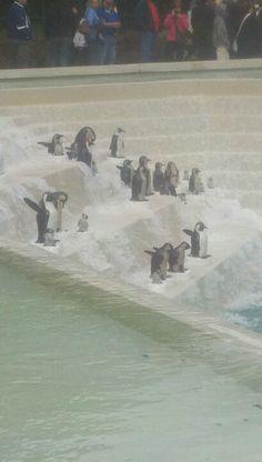 Art prize 2012..penguins