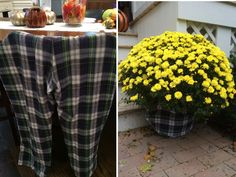 Use flannel pants, shirt or blanket to wrap around potted mums for an inexpensive pot decoration! #ThriftorTreat