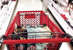 @ForrestTheCat goes to Target.