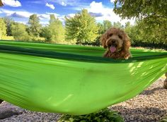 My dog likes to hammock http://ift.tt/2sa96B3