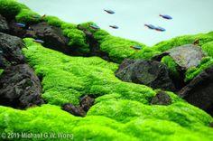 10 Tips on Designing a Freshwater Nature Aquarium Nano Aquarium, Aquarium Design, Aquarium Fish Tank, Planted Aquarium, Fish Tanks, Aquarium Landscape, Nature Aquarium, Aquascaping, Water Plants
