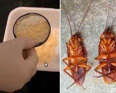 cucarachas-acabar-con-ellas