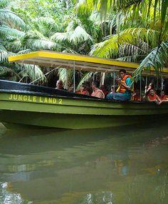 Jungle Land | Panama Canal Tour & Monkey Island