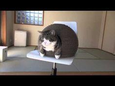 http://www.moderncat.net/2012/01/30/kamakuras-lair-cat-bed-from-japan/
