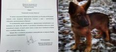 Russia Sends Puppy To France In Beautiful Display Of Solidarity