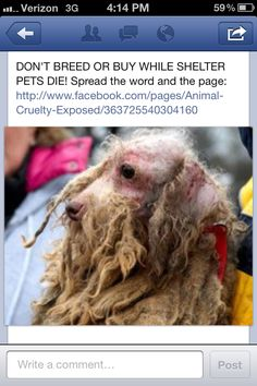 This is a puppy mill mom. Puppy mills ate horrible places that treat the 'breeders' as objects. Don't buy animals from pet stores or breeders. This is horrible.