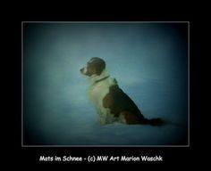 Mats, Portrait, Tier, Hund, Bretone, Berner Senne, Dog, Puppy, Schnee, LAndschaft, Tierportrait, Hundefutter, Hundeschule, Hundeerziehung, Hunde Leckerlies, MW art Marion Waschk