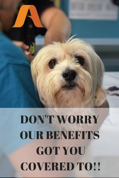 Our Pets are a Big part of our family.. Our Health Care Benefits includes them.. SAVE MONEY on your PET care bills along with #SaveMoney for the whole #family on #healthcare #USA  Tele-Med no extra charge, Dental/Vision/Chiro up to 50% on visit.. plus more. ONLY $39/month One time fee $99  #frugalliving #travel #healthyliving #workfromhome  #veternarian #lovedogs #sickdog #sickcat #businessman #businesswoman #smallbusiness #trucker #mommy #daddy #blogger #trucks #pethealth #pets #petcare