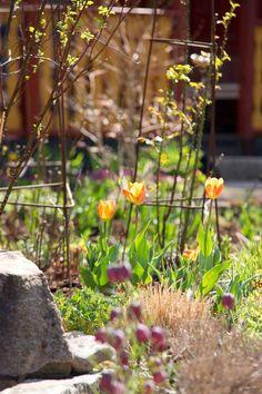 Ninnies tips: Planteringarna ska se ut som om växterna själva har valt växtplatsen där form, höjd och färgval är tongivande / Trädgårdens väggar, gångar och rum på bör vara genomtänkta och noga utformade. Detta för att man ska kunna njuta av växterna och insupa dofter och den rofylldhet som trädgården ger / Tillför benmjöl och annan naturlig gödsel för att stärka växterna. Använd aldrig gifter mot ohyra utan var rädd om fåglar och nyttiga insekter. Och var inte rädd för att använda…
