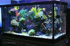 All sps tanks - Page 73 - Reef Central Online Community