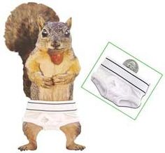 "SQUIRREL UNDERWEAR from American Science & Surplus, filed under stocking stuffers - SQUIRREL BRIEFS For squirrely lawyers? No, that would be stupid. These are genuine squirrel underpants. Nothing salacious, just your standard white cotton jockey-type drawers with an elastic waist. These are XXXXS, with a 9"" waist, but for squirrels they're pretty much one-size-fits-all. (Will also fit most guinea pigs but are probably over-sized for the average gerbil.)"