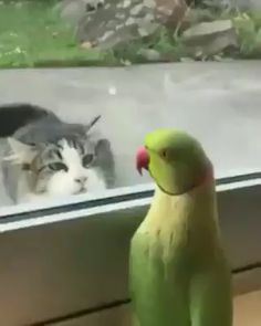 Parrot playing peekaboo with the cat from across the street 😄 <br> Funny Birds, Cute Birds, Funny Cats, Cute Little Animals, Cute Funny Animals, Cute Cats, Foto Flamingo, Funny Parrots, Cute Animal Videos