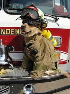 """'Chief' Puppy-Dog:  """"My name is 'Chuck' and I travel in this truck, along with the rest of the fire crew; we're a strong team through-and-through.""""  (Short Poem Written By: © Lynn Chateau.)  #Fire #Department #Firefighter"""