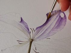 Step-by-step botanical watercolour painting of a clematis flower.