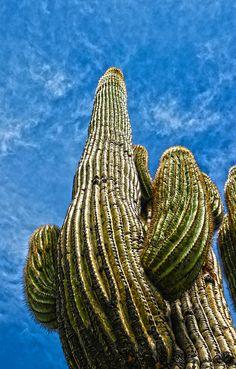 Saguaro National Park - AZ