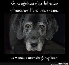 Ganz egal wie viele Jahre wir mit unserem Hund bekommen, es werden niemals genug… No matter how many years we get with our dog, there will never be enough! I Love Dogs, Cute Dogs, Animals And Pets, Funny Animals, Dog Pictures, Funny Pictures, Motivacional Quotes, Gatos Cats, Dog Shirt