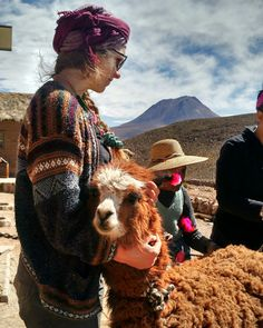 Wool earings and necklaces on the young alpacas... The mark of the Andean family's herd.