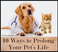 10 Ways to Prolong Your Pet�s Life
