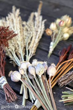 Dried flower stems for craft projects