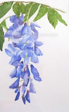 Wisteria Watercolor-Wisteria Painting-Wisteria Art-Print Art-Wisteria Print-Flower Watercolor-Flower Painting-Botanical Watercolor - A delicate representation of a wisteria flower. This is a print from my original watercolor. Arte Floral, Watercolor Cards, Watercolor Print, Watercolor Video, Watercolour Paintings, Green Watercolor, Watercolor Sketch, Oeuvre D'art, Flower Art