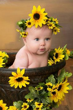 Beautiful Sunflower Baby !!