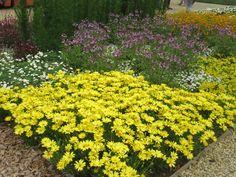 Blumen, verschiedene Farben BUGA-Standort Rathenow