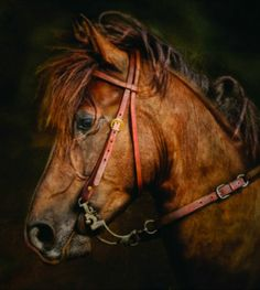 Paso Fino portrait. photo: Ryan Courson. Horse Sayings, Horse Quotes, Good Bones, Friesian Horse, Equine Art, Portrait Photo, Classic Beauty, Middle Ages, Horses