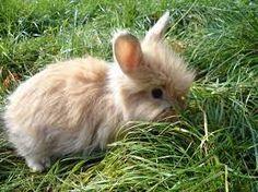 baby konijn  zo lief .