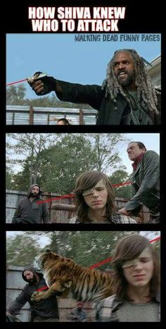 the walking dead daryl wallpaper , the walking dead season 10 Walking Dead Funny Meme, Walking Dead Show, Walking Dead Tv Series, Walking Dead Zombies, Walking Dead Season, Fear The Walking Dead, Z Nation, What Is A Zombie, Photo To Video