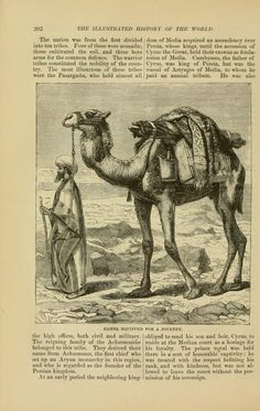 Camel equipped for a journey.
