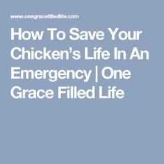 How To Save Your Chicken's Life In An Emergency | One Grace Filled Life