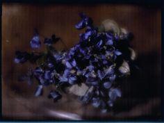 Heinrich Kuhn 'Violets'.