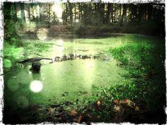 Bois de Taillehaut