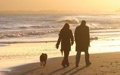 Mit dem Hund am Strand - Holland.com