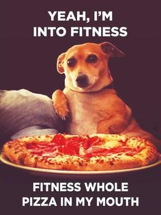 Funny Animal Memes, Funny Animal Pictures, Funny Dogs, Funny Animals, Animal Jokes, Funny Quotes, Dog Jokes, Crazy Animals, Funny Puppies