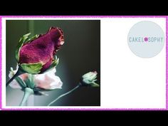 How to Make Rosebud: Gumpaste and Cold Porcelain - YouTube