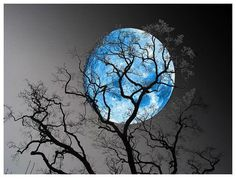 Blauwe maan achter boom