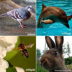 Visuell tegnordbok har to nye kategorier - klær og dyr.