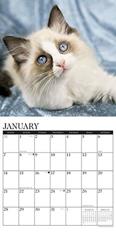 We looove Ragdolls! Buy your 2018 Ragdoll Cat calendar from Purrfect Gifts Online today! Cat Calendar, Pretty Cats, Online Gifts, Cat Lady, Pets, Starter Kit, Stuff To Buy, Animals, Future
