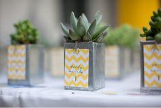 DIY succulent centerpieces + favors