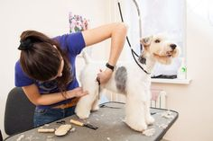 Pamper your pets with professional grooming services in Washington! We pride ourselves in providing top-quality grooming services for your dogs & small animals. Call 1-253-847-2786 now! Fox Terriers, Pitbull, Flea Shampoo, Cheap Pets, Pet Resort, Long Haired Cats, Dog Safety, Aggressive Dog, Cat Grooming