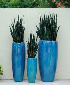 This container garden is all about the pots. They are fabulous, with the largest measuring 4 feet tall. The plants, Sanseveria, are incidental to the overall composition, but add a clean and modern look. Could be Miami Style or Southern America