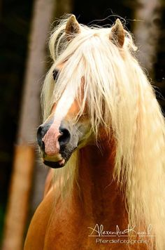 This horse reminds me of Fabio - poor thing needs his mane pulled...