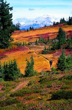 Washington, Glacier Peak Wilderness, Pacific Crest Trail.