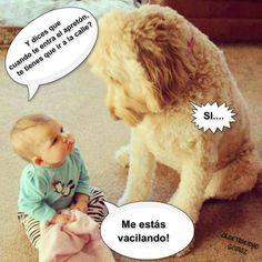 humor, bebe, pregunta, perro, conversacion